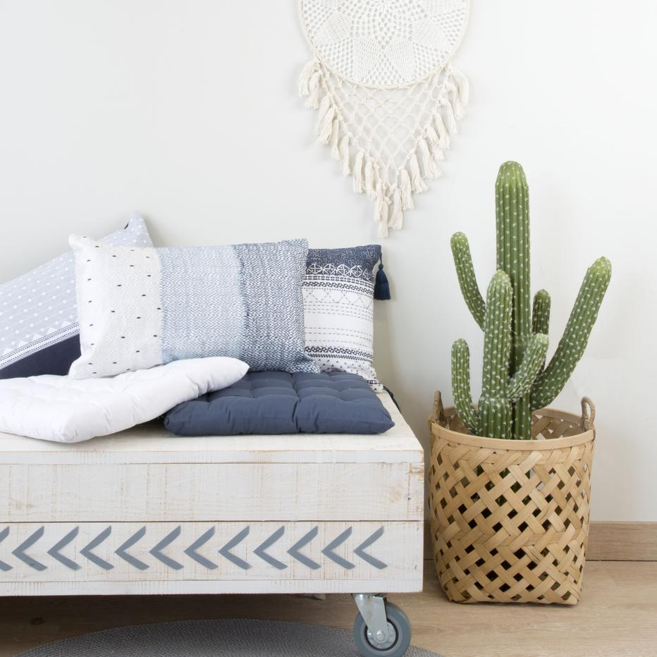 Neki planta cactus
