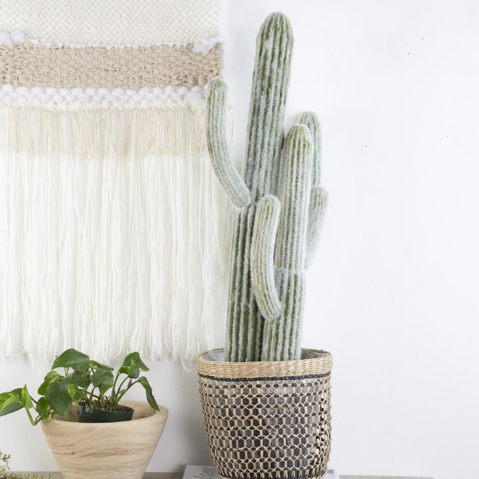 Tero cactus