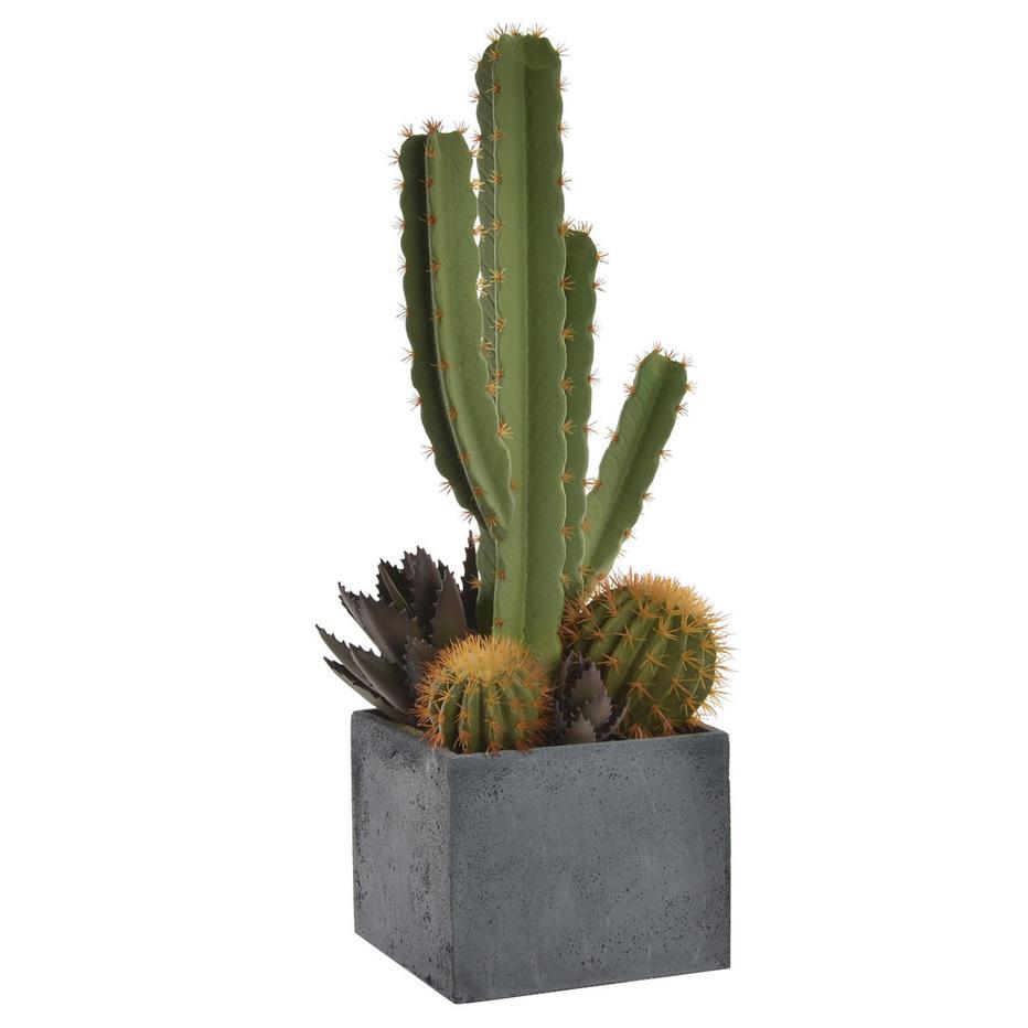 Akat cactus