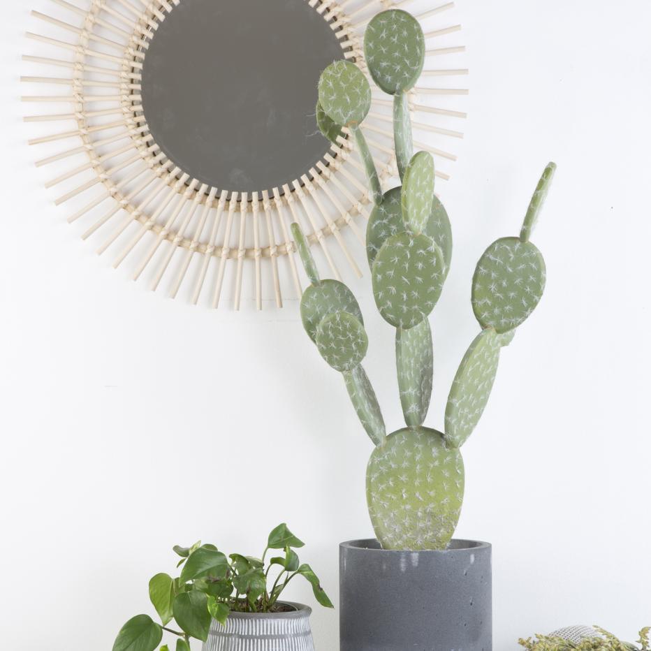 Aert cactus