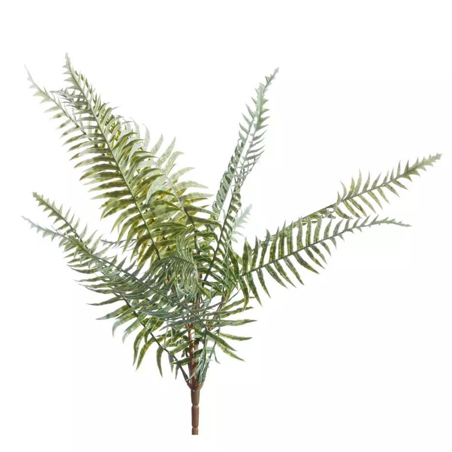 Suan branche fougère