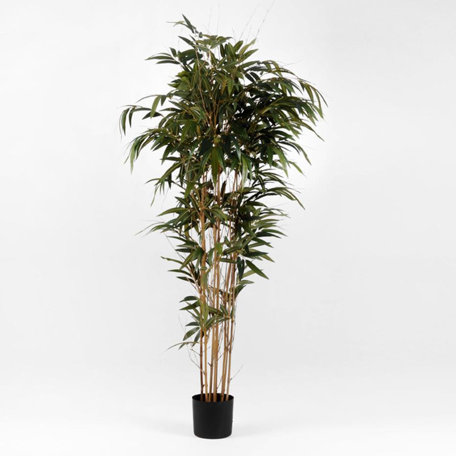Dary planta verde bambu h210