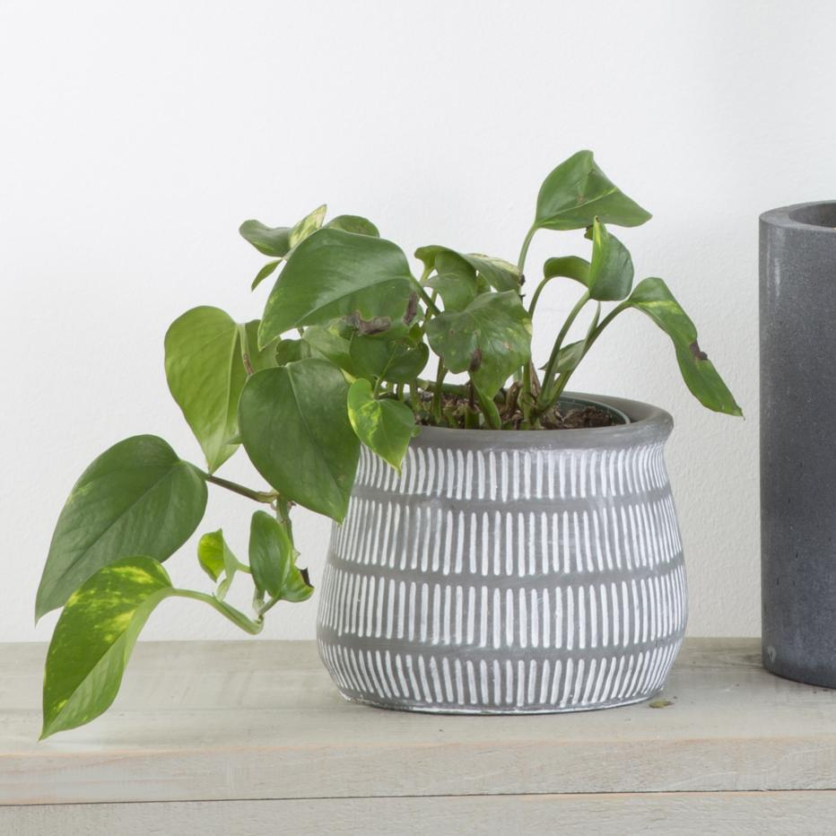 Yold vaso naturale