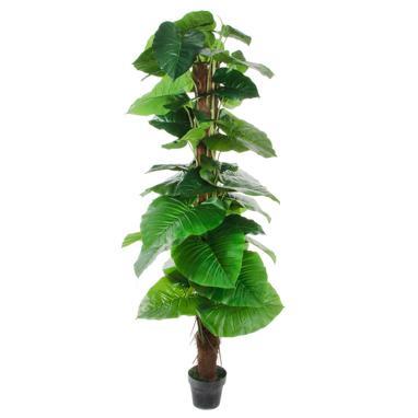 Asle pvc plant