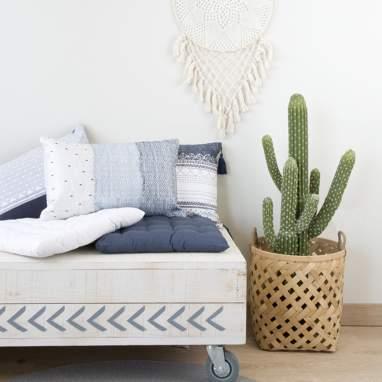 Neki pianta cactus