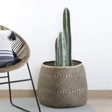 Yule cactus