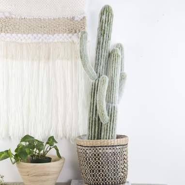 Tero cactus schiuma