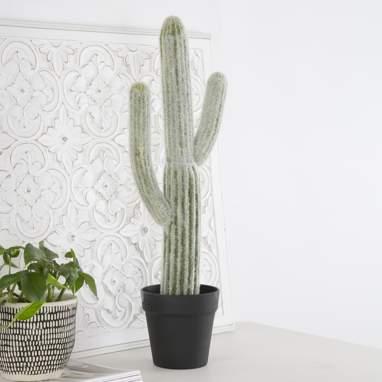 Sutc cactus schiuma
