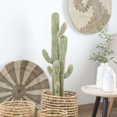 Amses cactus schiuma cemento