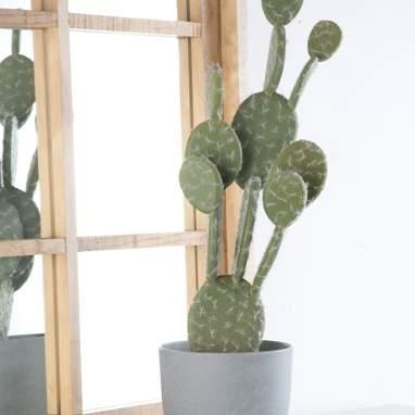 Vein cactus schiuma