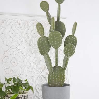 Snof cactus schiuma