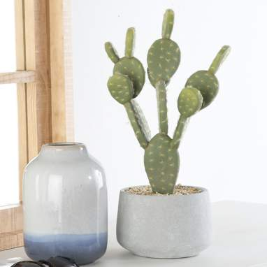 Erma cactus schiuma cemento
