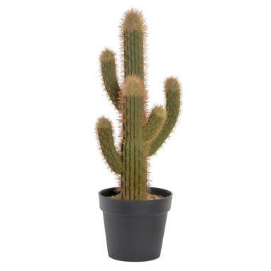 Suet pianta cactus verde