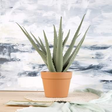 Aleo pianta verde aloe vera