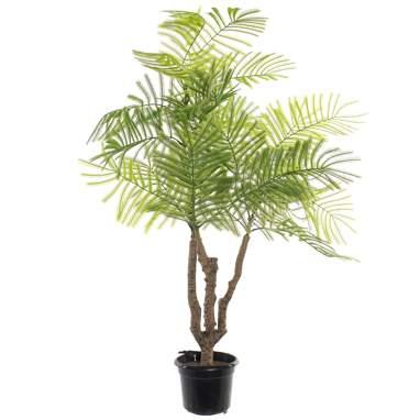 Keis pianta verde