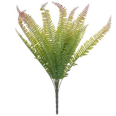 Kais pianta felce verde