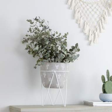 Fins small white cactus flowerpot