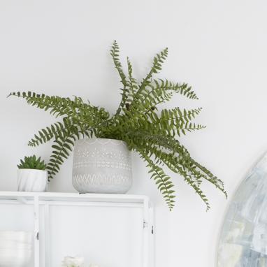 Zince vaso piante