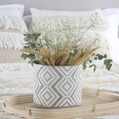 Goel vaso piante