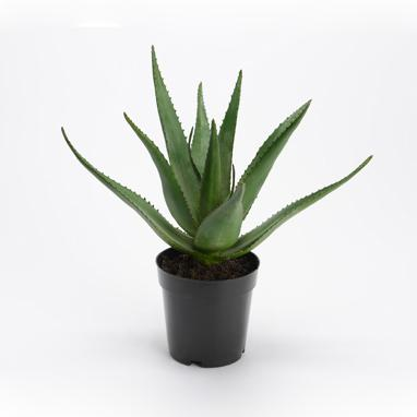 Clip synthetic aloe plant h38